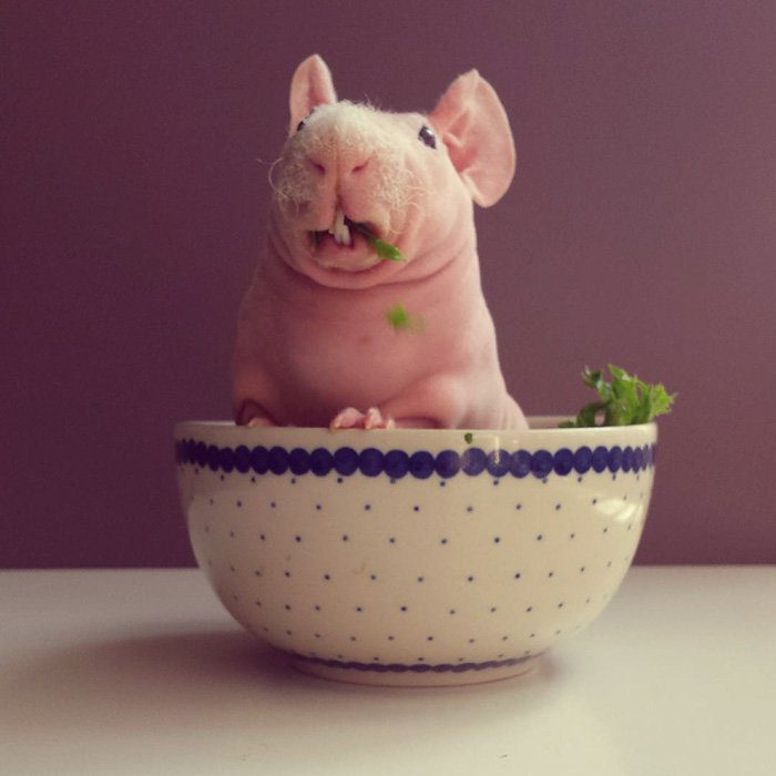 naked-guinea-pig-food-photoshoot-ludwik-70__700