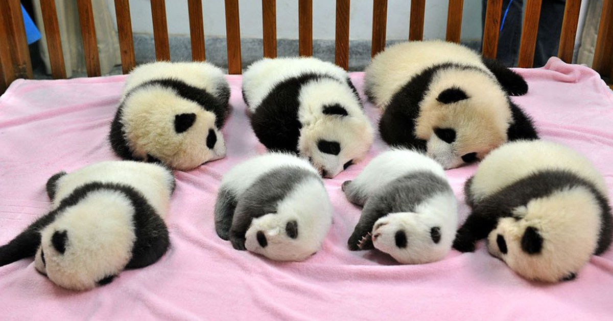 baby-pandas-day-care-fb